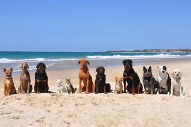 Campanya Platja per a gossos