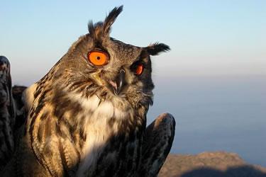 Ducs al al Parc Natural de Cap de Creus