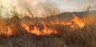 Foc a la zona de El Cortijo de Roses
