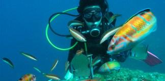 Càtedra Oceans i Salut Humana