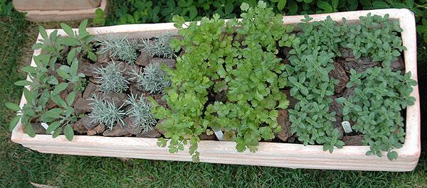 Horta de temperos em casa na jardineira