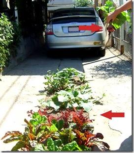 O acesso da garagem vira uma horta