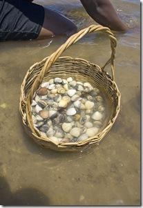 Mariscos recém colhidos da Praia de Acaú