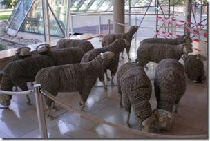 Rebanho de ovelhas de Jean-Luc Cornec