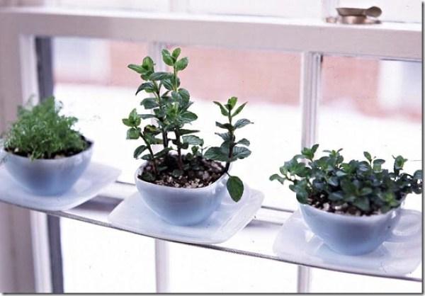 Mini-hortas plantadas em xícaras no parapeito da janela. Solução para jardins e hortas internas.