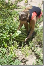 Eu, conferindo se a melancia está madura
