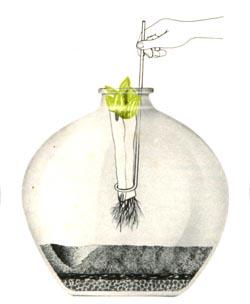 Plante as mudas