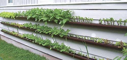 Fazendo uma horta na calha e fixando na parede