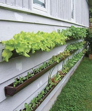 Horta com calhas na parede