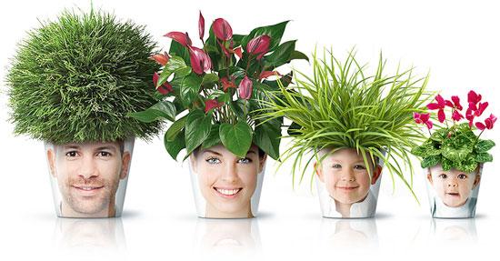 Fotos decoram os vasos de plantas, uma ideia divertida