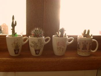 Coleção de canecas abriga cactus e suculentas