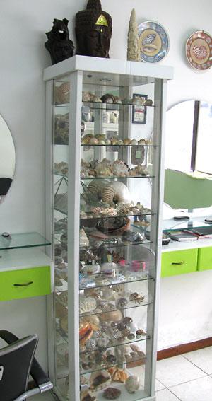 Coleção de conchas exposta em cristaleira