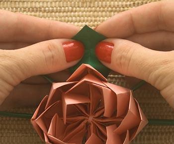 Abra as folhas da flor
