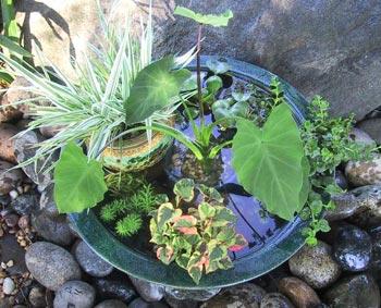 Jardim aquático com plantas que florescem, para varandas