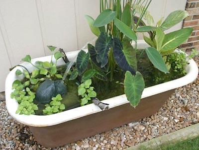 Jardim aquático montado dentro de uma banheira com direito a fonte de água