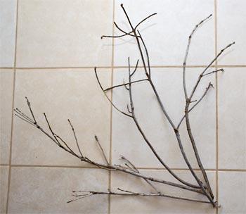 Separe galhos secos de poda