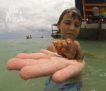 Criança encontrando espécies marinhas