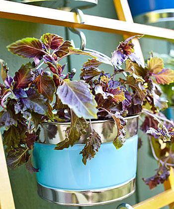 Plante as mudas em baldinhos