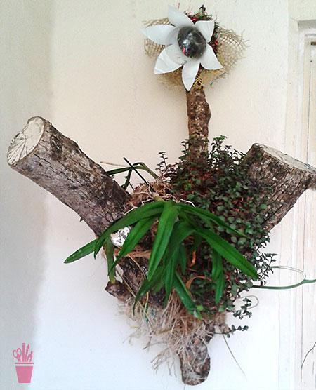 Suporte para orquídea com tronco seco