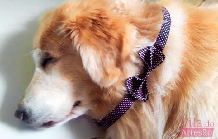 Como fazer uma gravata borboleta para seu gato ou cão
