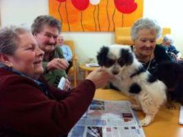 RESIDENCIA AMMA teràpia amb gossos 2013