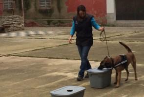 ensinistrament caní (1) web