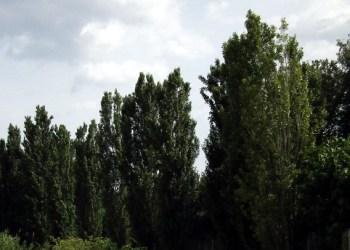 Arbres Parc fluvial V02