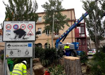 Tala arbre pollancre Ajuntament maig 2018