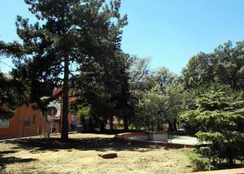 tala arbres placa Vilarrubias 2 (2)