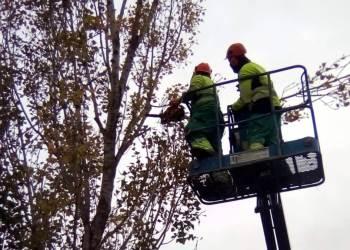 poda i tala arbres nov19 (2)