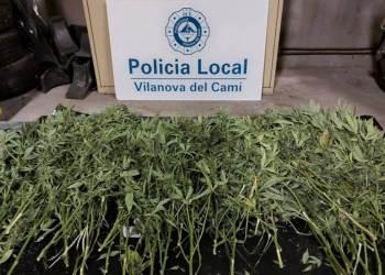 Policia Local marihuana-dest