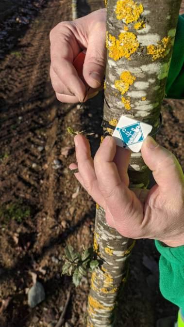 Projecte Vilanova Natura arbres 4