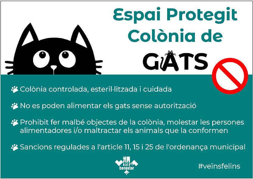 colonia de gats-1