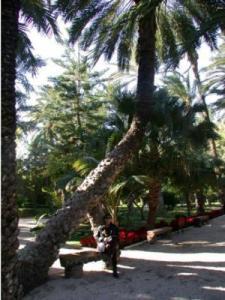 Grote palmentuin die in Elche ligt