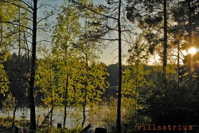 Tyyni järvi