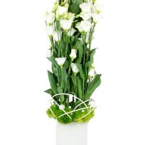 Lisianthus Blanc - Villa Florale