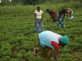 Female youths doign second weeding
