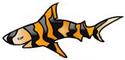 tiger shark studios