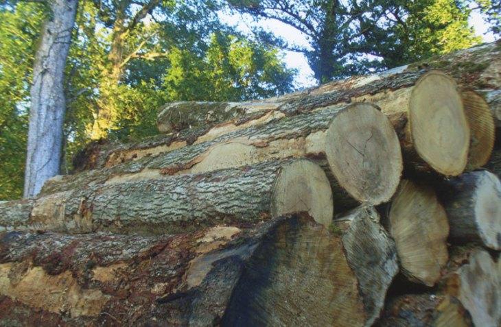 Oak stack at Castleforbes