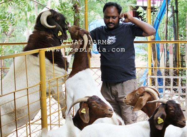 Goat Farming Training by Vijay Farms in Tamilnadu - VillageofGoats