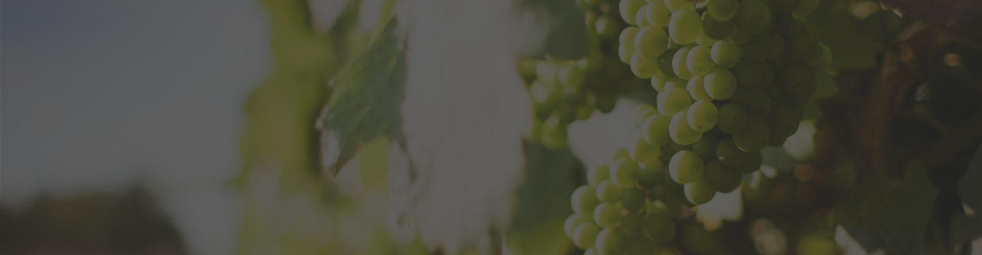 Villa Romana Estate Winery
