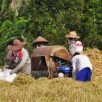 Rijstarbeiders