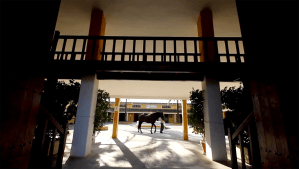 horse stables at la zagaleta