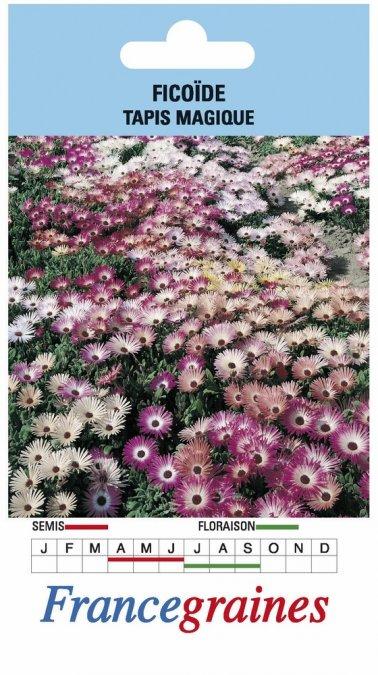 ficoide tapis magique jardinerie