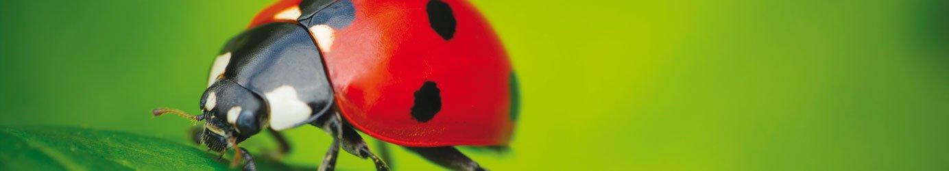 insectes utiles jardinerie villaverde