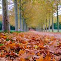 Jean-Christophe Guillot - Couleurs d'automne