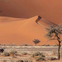 16e - Laurent Chaput - Namibie au sol