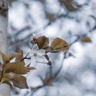 Sylvie Boursier - Un air de printemps