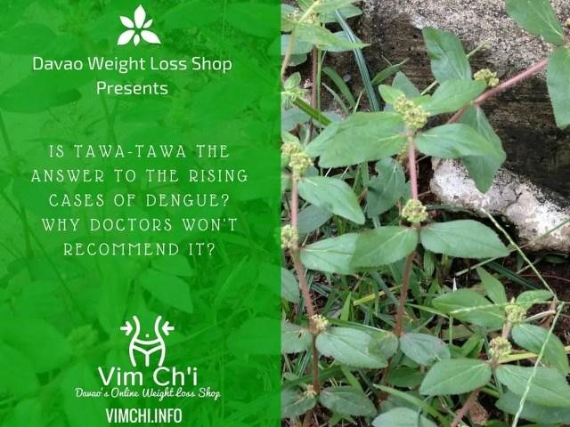 Natural Treatment for Dengue – How About Tawa-Tawa?