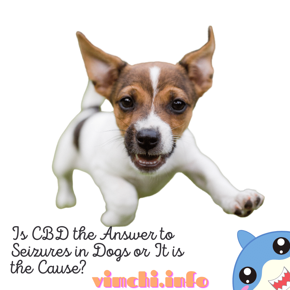 Can CBD for Dogs Cause Seizures